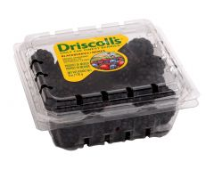 Driscoll's Usa Blackberries Pack 170G |?sultan-center.com????? ????? ???????