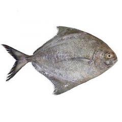 Iranian Halwayouh Fish