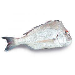Andag Fish Iran