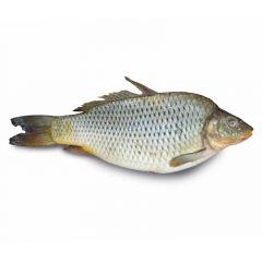 Bunni Fish Iran