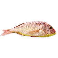 Sultan Ibrahim Whole Fish Saudi