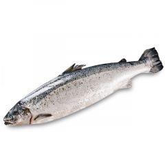 Salmon Norway Avg Weight(3-5Kg) Price Per Kg  sultan-center.comمركز سلطان اونلاين