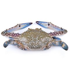 Blue Swimming Crab (Gobgob) Kuwait Per Kg |sultan-center.comمركز سلطان اونلاين