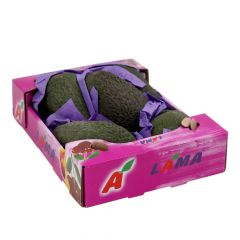 Lama Avocado Box |?sultan-center.com????? ????? ???????