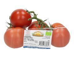 Natureland Organic Tomatoes Netherlands
