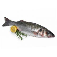 Seabass Fish Turkey