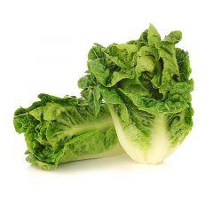 Little Gem Lettuce Spain